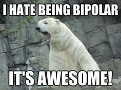 Funny pictures about Bipolar Polar Bear. Oh, and cool pics about Bipolar Polar Bear. Also, Bipolar Polar Bear. Funny Pictures With Captions, Funny Captions, Funny Animal Pictures, Funny Fails, Caption Pictures, Animal Captions, Funny Animal Memes, Funny Animals, Funny Memes