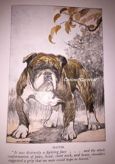 NICE  VINTAGE 1926 ENGLISH BULLDOG DOG PRINT CHARLES LIVINGSTON BULL. Pinned by Judi Crowe.