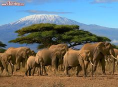 Monte Kilimanjaro, Tanzania - E& uno degli . Wonderful Places, Great Places, Places To See, Beautiful Places, Monte Kilimanjaro, Elephant Love, Baby Elephants, 3d Prints, Travel Tours