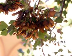Berry leftovers Berry, Fruit, Plants, Bury, Plant, Planets