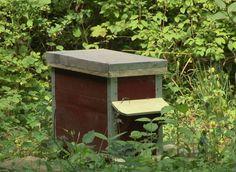 Comment attirer de nouveaux essaims d'abeille pour augmenter sa récolte.