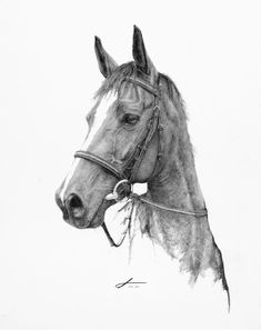Incredible custom horse portrait in graphite by artist Susan McCarty. She really captures the likeness and spirit of the horse. Phenomenal rendering in graphite pencil!