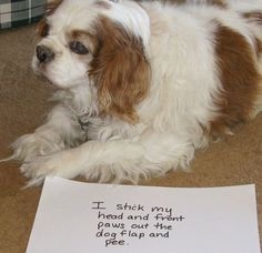 Dog Shaming: So I wasn't all the way out? (link leads to lots of other shaming pictures) Cute Funny Animals, Funny Animal Pictures, Funny Dogs, Puppy Pictures, Pet Dogs, Dog Cat, Pets, Doggies, Animal Antics