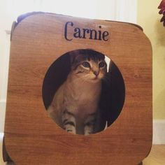 Meet Carnie we think she is so beautiful  #cat #catsofinstagram #catstagram #catsagram #cats_of_instagram #catfurnature #catfurniture #catsinboxes #cattoy #INSTACAT_MEOWS #cutecat #PurrMachine #catsinboxes #catbox #Excellent_Cats #BestMeow #dailykittymail #thecatniptimes #catcube #catpod #ArchNemesis #FlyingArchNemesis #myindoorpaws #ififitsisits #cutecatcrew #catchalet #catnip #themeowdaily #kitty #catpyramid #pyramid