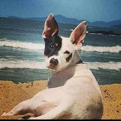 Wendy e a praia...