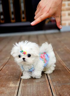 7 Adorable and funny dressed up pets, click on this pic to see them all