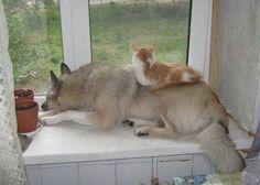 Un beau Duo Chat Chien devant leur fenêtre