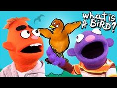 WHAT IS A BIRD? (Song for Kids ♫)