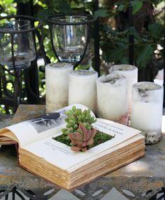 горшок для комнатных растений из книги