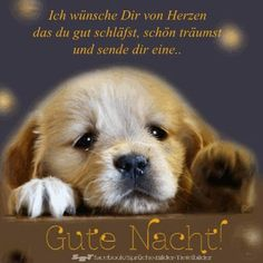 The opposite time, I received a digital send from a woman who instructed me Cute Puppy Names, Cute Puppies, Dogs And Puppies, Funny New, New Puppy, Good Night, Animals And Pets, Labrador Retriever, About Me Blog