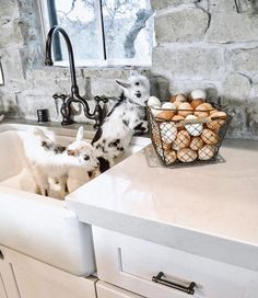 Baby goats are ALWAYS better than dirty dishes in a sink! 🐐 How cute are these little ones? Do you own or want goats? 😍 TAG a friend who… Baby Farm Animals, Cute Little Animals, Raising Farm Animals, Casa Magnolia, Cute Goats, Fresh Farmhouse, Farmhouse Style, Urban Farmhouse, Farmhouse Homes