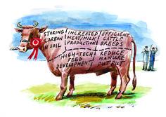 #DanWilliams #cow #food #editorialillustration #illustration #lindgrensmith