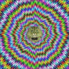 Resultado de imagem para random images