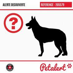 Cette Alerte (205579) est désormais close : elle n'est donc plus visible sur la plate-forme Petalert Suisse. Cette Alerte est échue automatiquement depuis le 08.02.2020 Merci pour votre aide. Visible, Movies, Movie Posters, Saint Martin, Switzerland, Dog, Animaux, Thanks, Pet Dogs