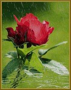 Őszi eső.....,Esik eső.............,Esőben,Tánc az esőben,Esik…