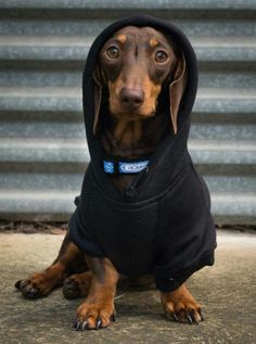 classy hoodie hound  Excellent ! We're glad you feel like it ! Allow us to know if you get requests at all , we're happy toassist you to : ) Here's my store ==> https://etsytshirt.com/dachshund #partynight