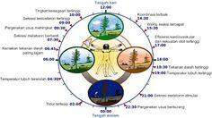 Ritme Circadian / Jam Biologis Manusia