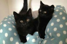 Cute kittens!!!