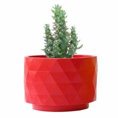 Austrocylindropuntia Subulata en maceta Polygon roja mate disponible en MyCoolCactus.com; precio orientativo 19€, $23.43