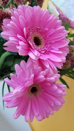 Flower Background Wallpaper, Flower Phone Wallpaper, Flower Backgrounds, Beautiful Rose Flowers, Exotic Flowers, Beautiful Flowers, Bulb Flowers, Flowers Nature, Flower Centerpieces