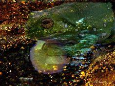 """""""La luna cammina sull'acqua. Com'è tranquillo il cielo! Va segando lentamente il tremore vecchio del fiume mentre una rana giovane la prende per specchietto."""" - Federico Garcia Lorca"""
