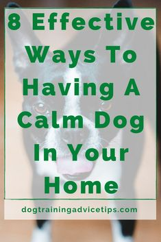 8 Effective Ways To Having A Calm Dog In Your Home. #dogtrainingadvicetips #dogbehavior #dogtraining #dogobedience #dogtrainingtips #dogtips #dogcalm #dogs #dogcare Dog Nails, Golden Puppy, Indoor Pets, Dane Dog, Puppy Care, Dog Care Tips, Dog Training Tips, Baby Dogs, Dog Friends