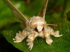 Hairy Moth wasn't sure what to put it under. I don't really like moths but this one is cute soo...