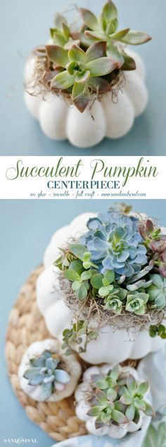Ease into fall with a gorgeous DIY Succulent Pumpkin Centerpiece. This easy fall… Ease into fall with a gorgeous DIY Succulent Pumpkin Centerpiece. This easy fall craft requires no glue, is reusable, and makes a great hostess gift! Succulent Centerpieces, Pumpkin Centerpieces, Diy Centerpieces, Quinceanera Centerpieces, Pumpkin Arrangements, Centrepieces, Suculentas Diy, Cactus Y Suculentas, Easy Fall Crafts