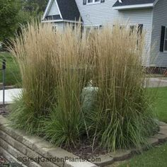 1000 images about outside deck fire pit yard on for Tall ornamental grasses for screening