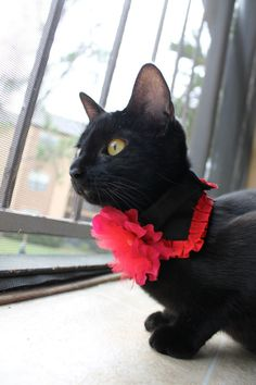 Hey, I found this really awesome Etsy listing at http://www.etsy.com/listing/122092282/red-fabric-flower-on-black-cat-collar