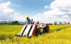 Down on the Farm: Agriculture in China Today - CKGSB Knowledge
