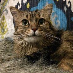 #catsofinstagram #catstagram #cats #cat #cat #catsofinsta #catsofinsta