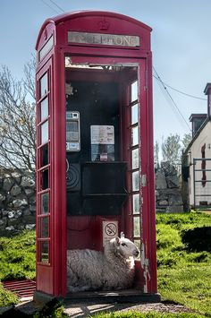 """♥ ~ ♥ Sheep ♥ ~ ♥ """"I'll be calling Ewe"""" - Clashnessie, Assynt, Scotland Farm Animals, Animals And Pets, Telephone Booth, Sheep And Lamb, England And Scotland, Tier Fotos, English Countryside, Belle Photo, Country Life"""