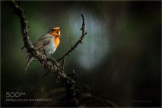 /// by Pepsovich #animals #animal #pet #pets #animales #animallovers #photooftheday #amazing #picoftheday
