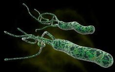 5 Best Home Remedies For H Pylori Bacteria | Findhealthremedies.com