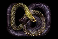 ¿Que te parece un cuadro de serpientes para tu pared? (Fotos)