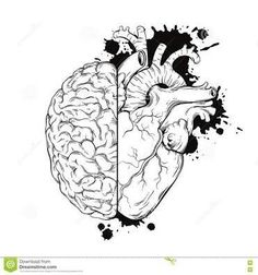 Illustration of Hand drawn line art human brain and heart halfs. Grunge sketch tattoo design isolated on white background vector illustration. Logic and emotion priority concept. vector art, clipart and stock vectors. Sketch Tattoo Design, Tattoo Sketches, Art Sketches, Art Drawings, Sketch Ink, Sketch Design, Brain Drawing, Brain Art, Human Heart Drawing