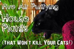 Five air purifying house plants (that won't kill your cat): Bamboo palm, aloe vera, spider plant, snake plant, boston fern