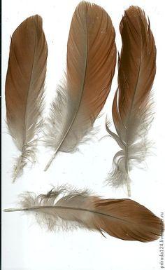 """Купить Перья птицы """"Нильский (египетский) гусь"""" - перья для отделки, Перья для декора, перья гуся"""