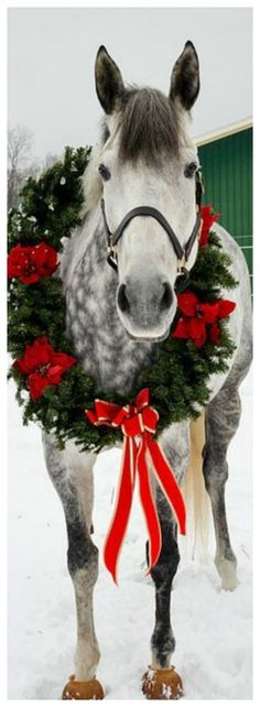 Today is the National Day of the Horse and as such horses everywhere want to wish us all a Merry Christmas. Christmas Horses, Christmas Animals, Country Christmas, Merry Christmas, Christmas Lights, Christmas Pets, Christmas Cards, Christmas Time, Vintage Christmas