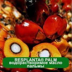 Растительный эмульгатор из масла пальмы RESPLANTA®PALM  с сохранением жирнокислотного состава и свойств исходного масла (пальмы): увлажняет, смягчает, кондиционирует