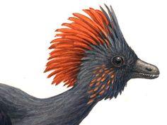 Anchiornis - Buscar con Google