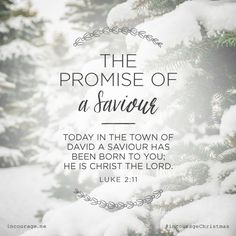 "Day 2- The Promise of a Saviour // ""Today in the town of David a Saviour has been born to you; He is Christ the Lord.""  {Luke 2:11} // 25 Days of Christmas Promises #incourageChristmas"