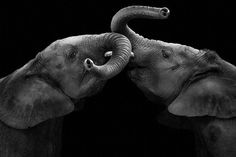 La mystérieuse beauté des animaux capturée par les saisissants portraits de Wolf Ademeit