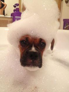 Boxer bubble bath time !!