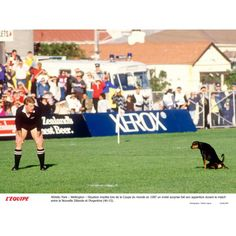John Kirwan, le légendaire ailier all black aux 63 sélections et 35 essais sous le maillot à la fougère. All Blacks, Rugby, Sports, World Cup Fixtures, Hs Sports, Sport, Football