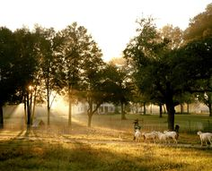 Sheep aren't the only ones flocking to Alexandra Lake Farm outside Dade City, Florida.