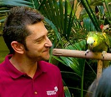 Join us for an Amazon bird encounter which takes you behind the scenes for a closer look at the Amazon birds at the Aquarium. Amazon Birds, Vancouver Aquarium, Animal Makeup, Sea Otter, Parrots, Closer, Behind The Scenes, Join, The Incredibles