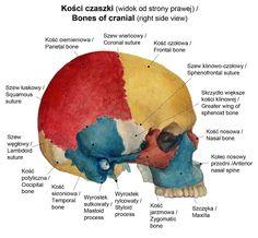 Polish Language, School Information, School Notes, School Hacks, Head And Neck, Medical School, English Grammar, Back To School, Homeschool