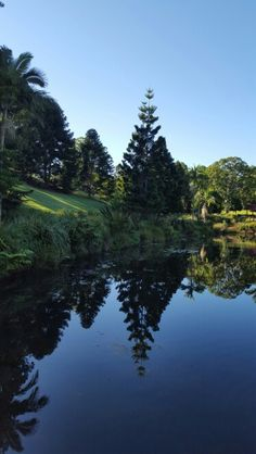 Love the ponds and trees at Russell Family Park, Montville, Queensland.  So beautiful